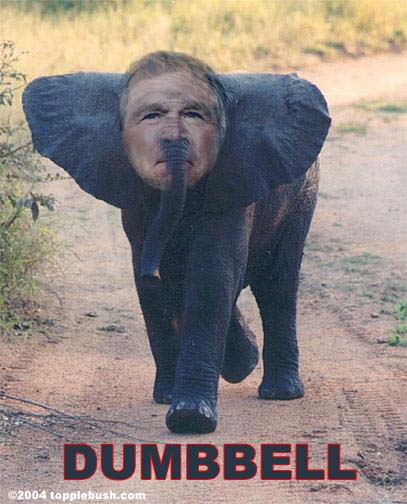 Dumbbell the elephant